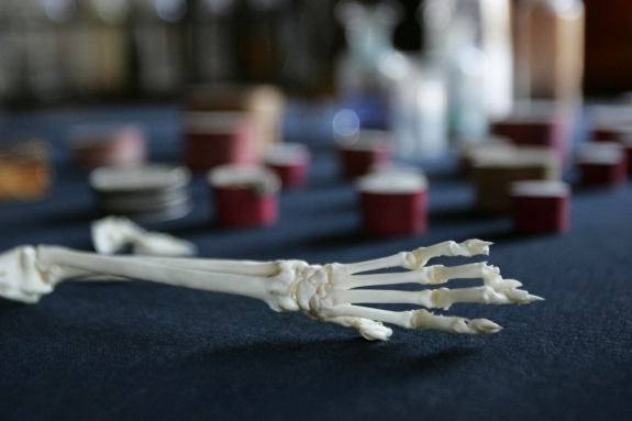 Pigeon bones are displayed in Charles Darwin's former home, Down House, in Kent, southern England