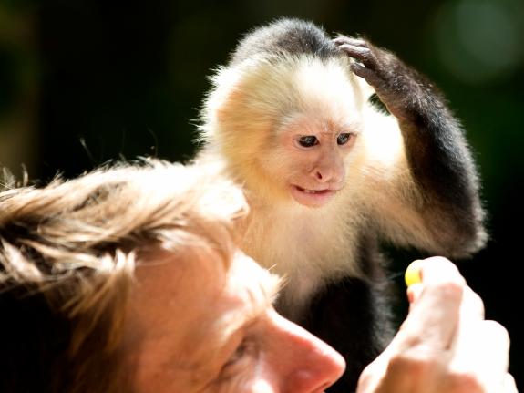 Jungle Island Babies