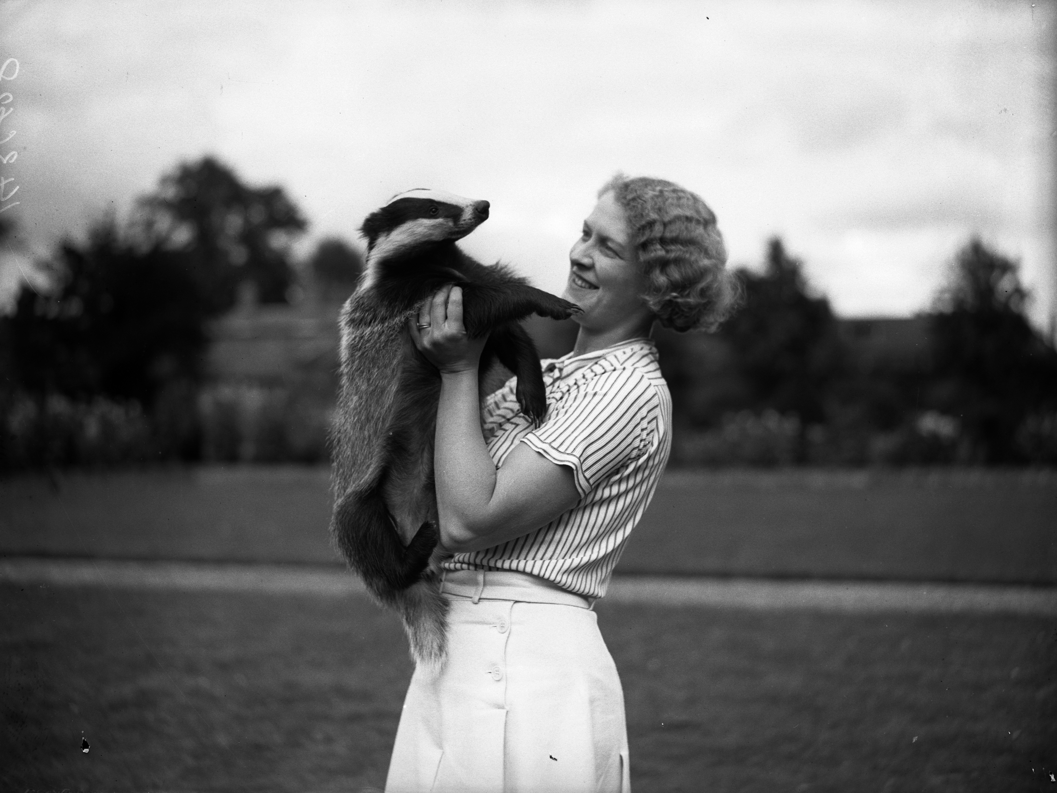 Mrs Philip Dee in 1936 with her pet badger at her home in Hanworth, Middlesex. The badger shares a hutch with a pet fox, which belongs to the Tannett family who live next door to Mrs Dee.