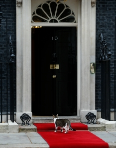 Larry, the official 10 Downing Street, cat pauses on the red carpet on the doorstep of 10 Downing Street in London.