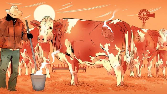 Cattle Thieves 3