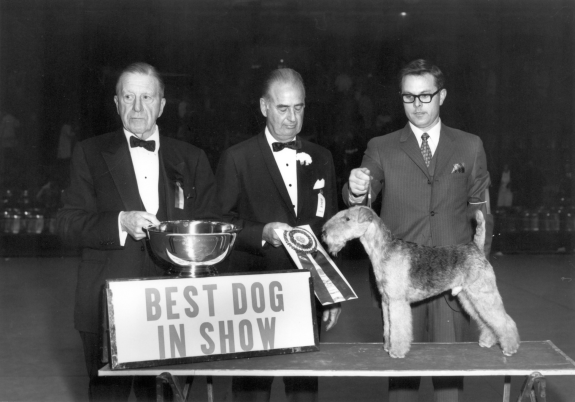 Stingray of Derryabah, a Lakeland terrier, won Best in Show at Westminster in 1968 and Best in Show at Crufts, the U.K.'s major dog show, the year before.