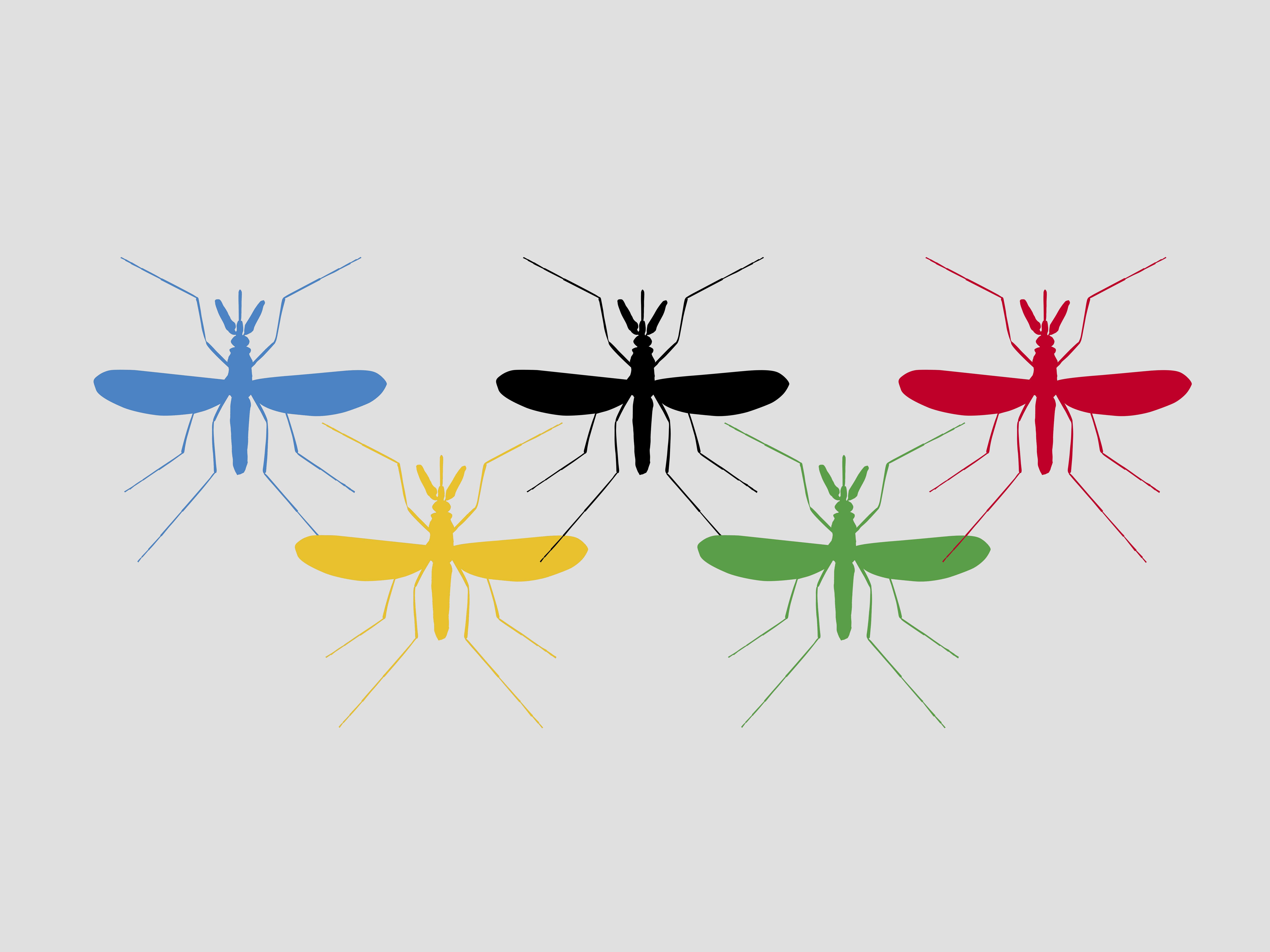 Mosquito seen under microscope (x6), Culicidae