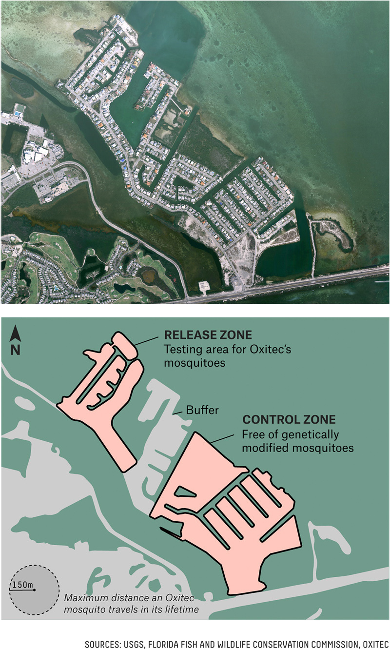 Satellite photo of Key Haven, Florida, and how the community would be segmented for the experiment