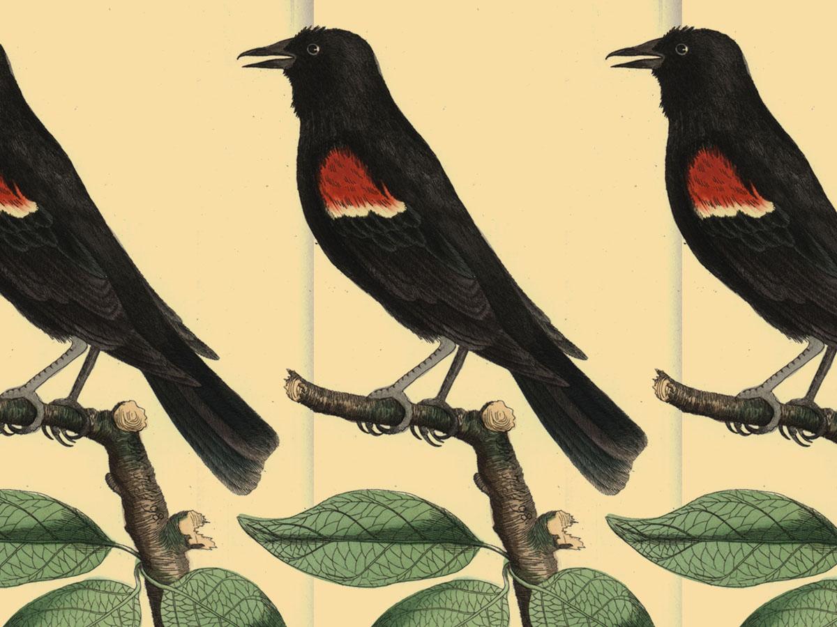 birdcount_4x3