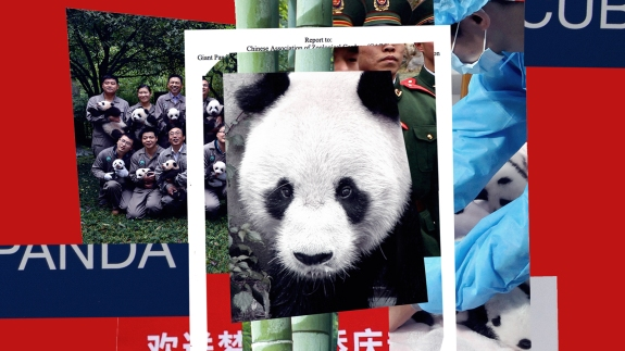 The Complicated Legacy Of A Panda Who Was Really Good At Sex