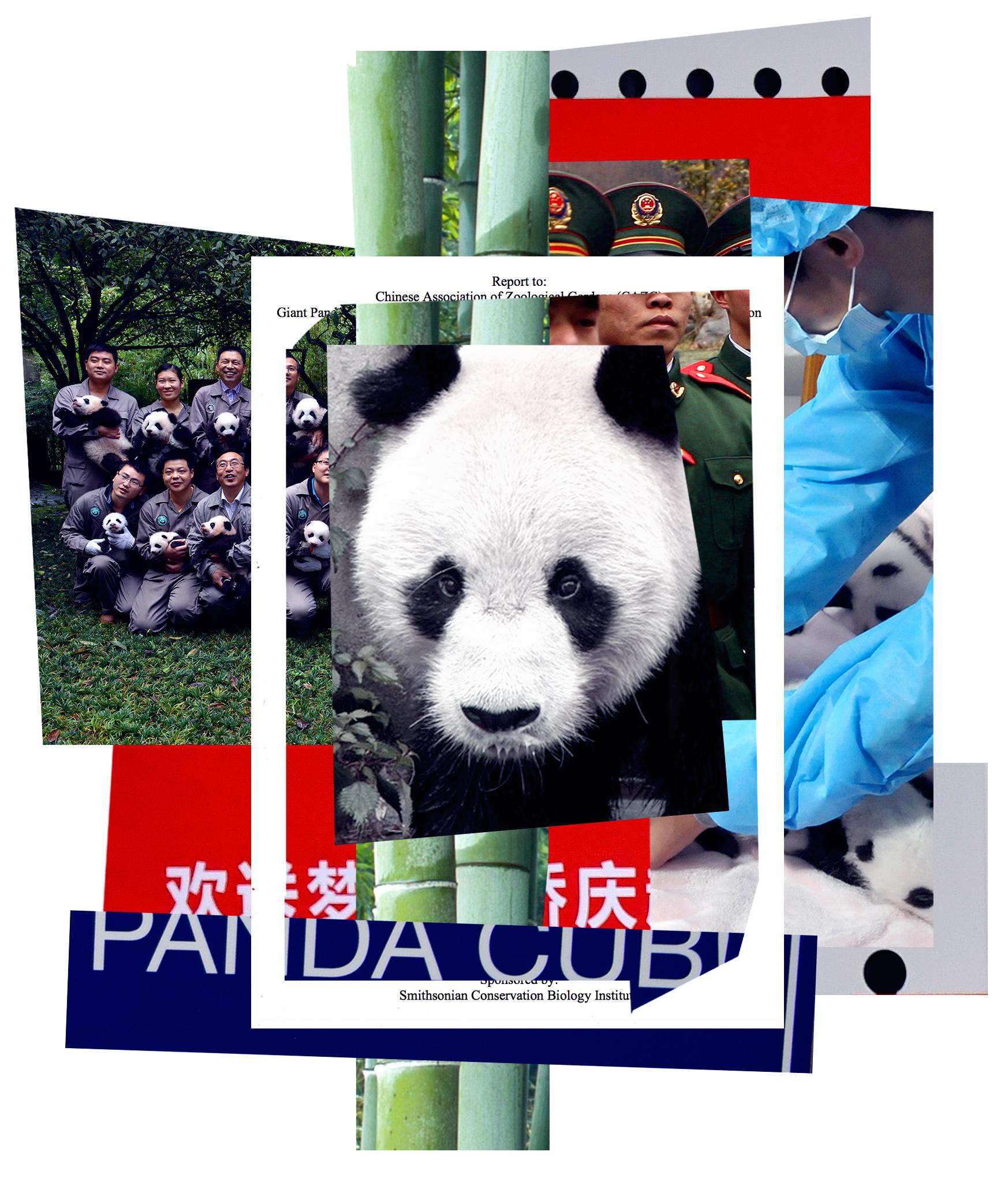 FRANCE-CHINA-PANDA-ENVIRONMENT-ANIMAL