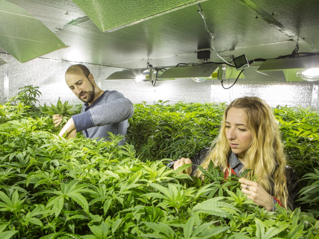 Buy marijuana Vancouver