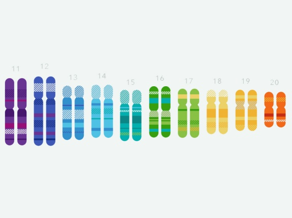 Chromosomes-4×3
