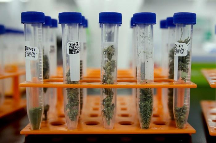 Marijuana samples for testing